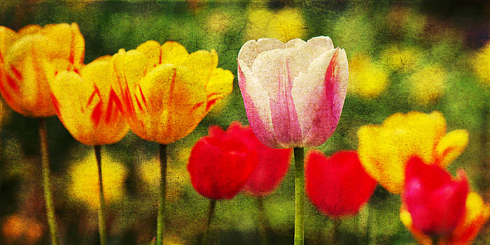 Angela Doelling AD DESIGN Photo and PhotoArt - Colorful tulips