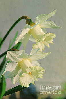 Colorized Daffodils Nature Photograph by Melissa Fague