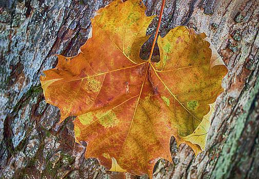 Colors and textures by Tammy Chesney