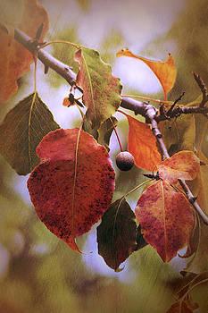 Saija Lehtonen - Colors of Autumn