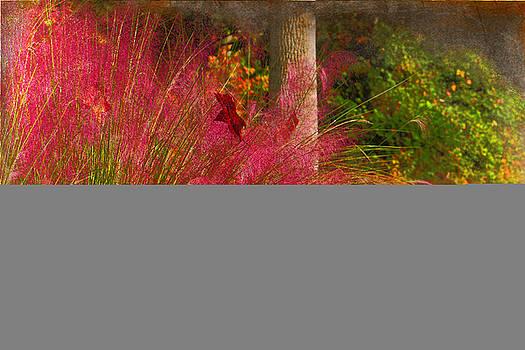 Colors Of Desire by Barbara Teller