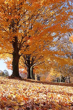 Colors of Fall by Jean Haynes