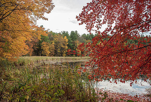 Colors of Fall by Lee Fortier