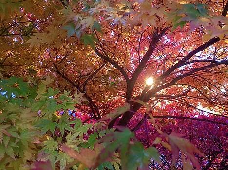 Colors Of Joy by Karen Horn