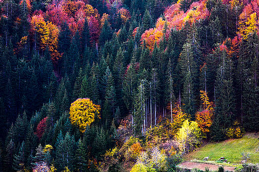 Colors Of Rhodope by Evgeni Dinev