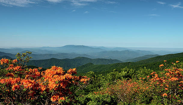 Colors Of Roan Mountain by Jamie Pattison