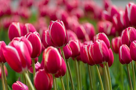 Colors Of Spring - Red v2 by Dockside Colors