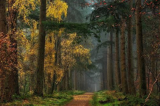 lars van de goor artwork collection forests in fall. Black Bedroom Furniture Sets. Home Design Ideas