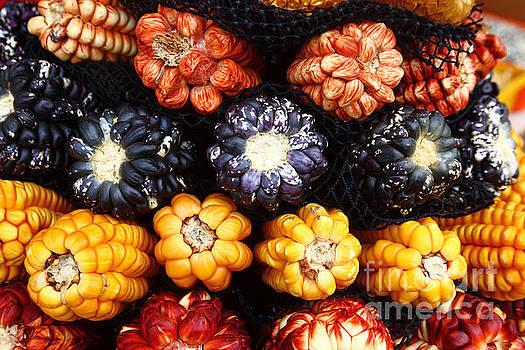 James Brunker - Colourful Corn Varieties Peru