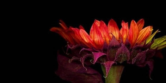 Colourful instinct by Maneesh Kumar