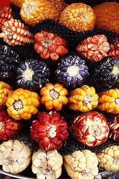 James Brunker - Colourful Peruvian Corn Cobs