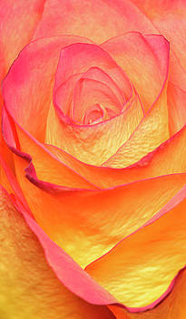 Colourful Rosie by Roy McPeak