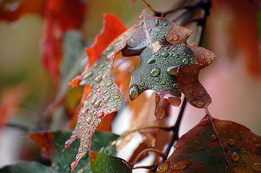 Colours of Fall I by Robert Meanor