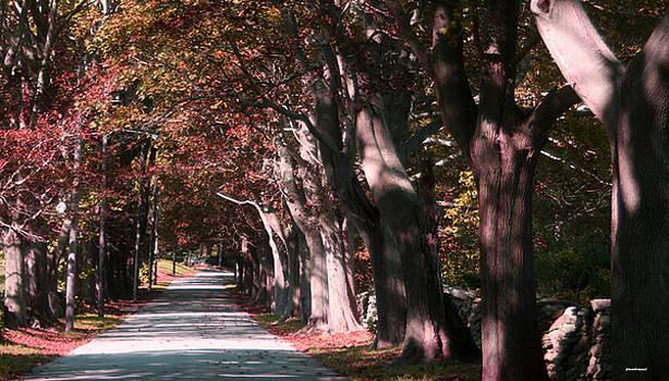 Colt State Park Bristol Rhode Island by Tom Prendergast