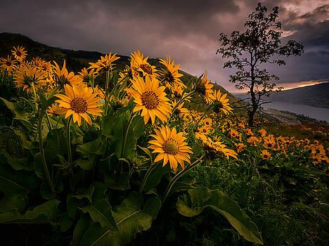 Columbia Gorge Joy by Dan Mihai