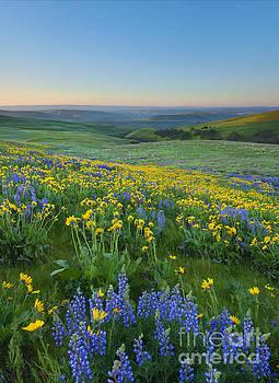 Mike Dawson - Columbia Hills Wildflower Dawn