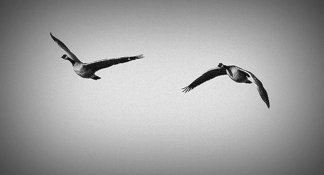 Come Fly with Me by Barbara Dudley