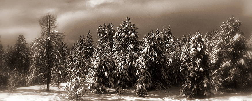 Coming Winter Storm by Steve Patton