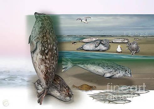 Common Seals - nature interpretation panel  - naturlehrtafel - zoo schautafel - zoo informatiepanel by Nature-Interpretation-Panels - Naturlehrtafeln - S Maassen-Pohlen