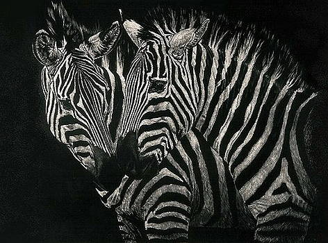 Common Zebra by Barbara Keith