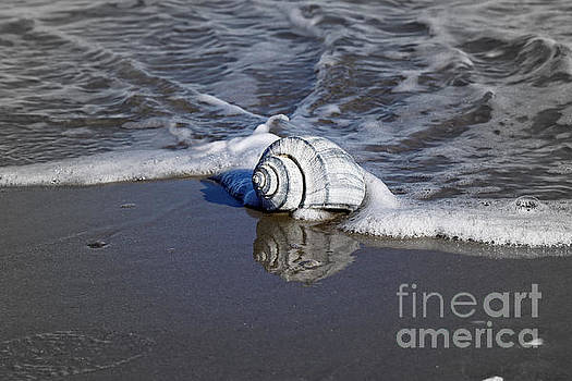 Conch Shell Reflection by Denise Pohl