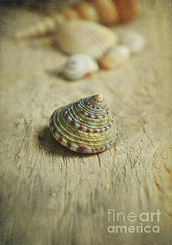 Cone Shell by Lyn Randle