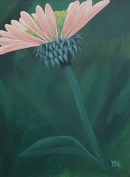 Coneflower by Carrie Auwaerter