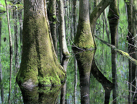 Congaree National Park by Cathy Harper