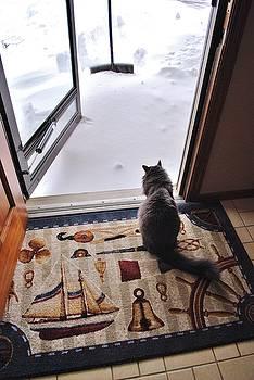 Joy Bradley - Contemplating Winter