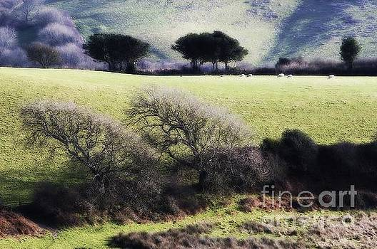 Contrast of trees by Gary Bridger