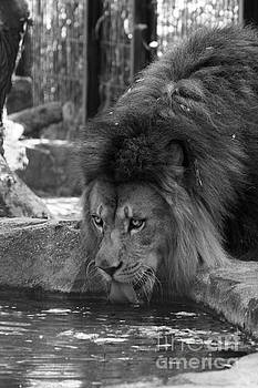 Cool Drink Of Water  Black And White by Judy Whitton