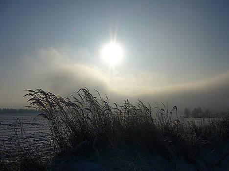 Cool Sun by Beata Rosslerova