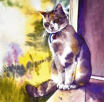 Coops the Cat by Sandra Phryce-Jones