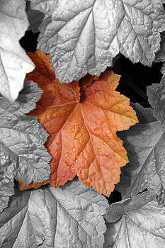 Copper Leaf by Heather Lee