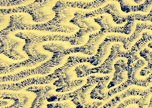 TONY GRIDER - Coral Fossil Abstract -02