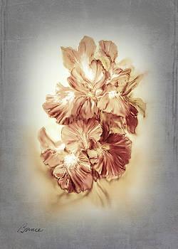 Coral Iris by Bonnie Willis