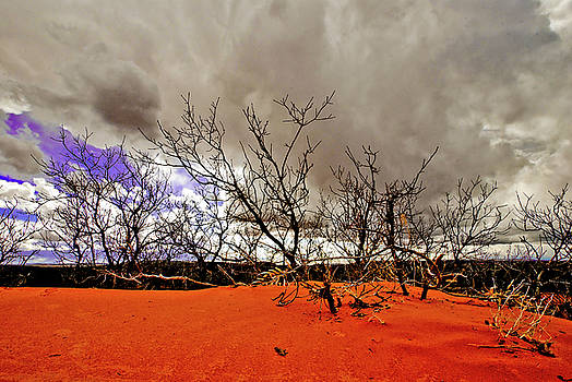 Coral Pink Sand Dunes by Zee Helmick