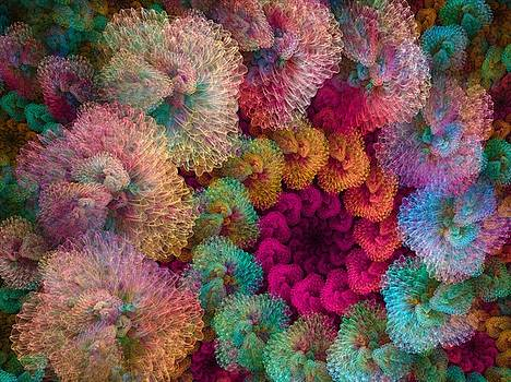 Coral Puffs by Amorina Ashton