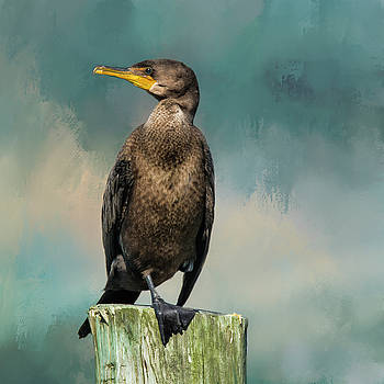 Cormorant 2 by Cathy Kovarik