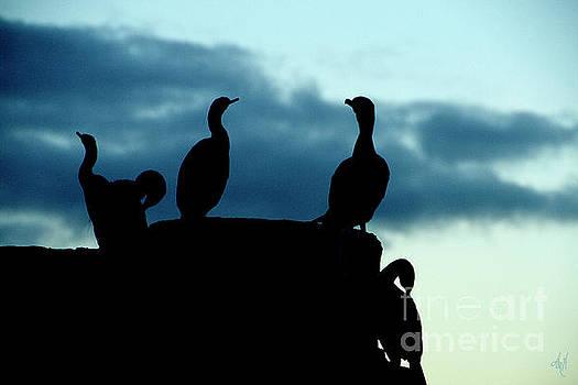 Cormorants in Silhouette by Victoria Harrington