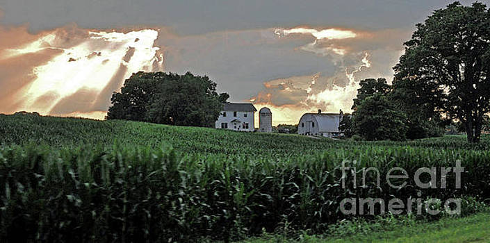 Corn After The Storm by Lydia Holly