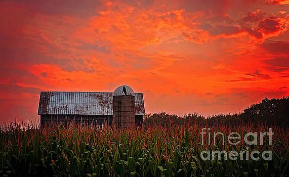 Corn by Randall  Cogle