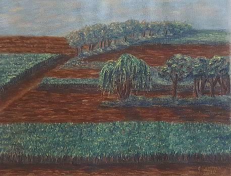 Cornfields by Joann Renner
