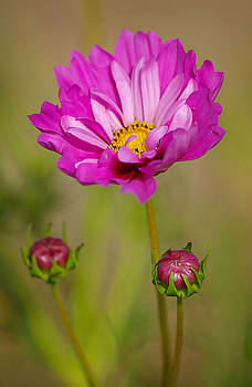 Cosmo by Marilyn Peterson