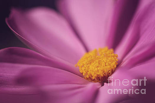 LHJB Photography - Cosmos Dreams...