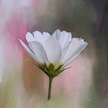 Kim Hojnacki - Cosmos Flower in White