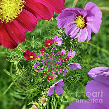 Cosmos Flowers Abstract by Smilin Eyes  Treasures