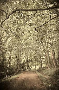 Svetlana Sewell - Cosy Path