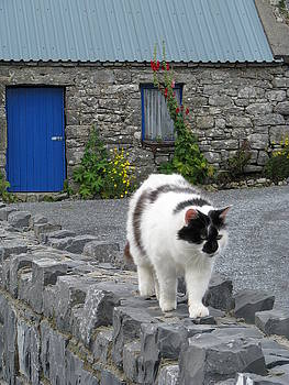 Cottage Cat by Sheila Rodgers