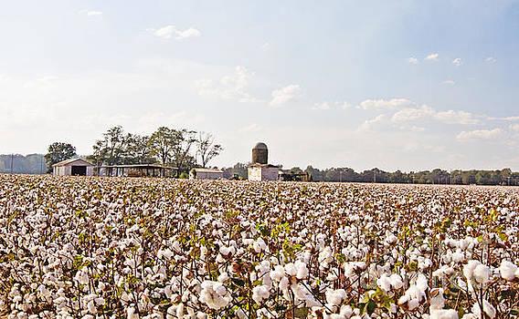 Scott Pellegrin - Cotton Crop